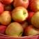 Bio-Wochenmarkt… und Regionales Rahlstedt