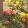 Traditionelles Ostereiersuchen im Affen- und Vogelpark Eckenhagen