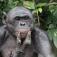 Mythos Kongo - Lichtbildervortrag