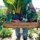 Eiladung zur Eröffnung der Gemüsegärten