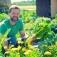 Einladung zur Eröffnungsfeier der Gemüsegärten