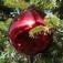 Wie Weihnachten erfunden wurde...