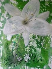 Blütenträume & Lebensräume