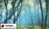 """Lange Thermennacht (Textilfrei) """"Phantasiewelten"""" In Der Thermen & Badewelt Sinsheim"""