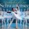 Schwanensee - Staatsballett Kiew