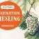 Faszination Riesling (Wein-Verkostung)