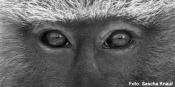 """Ausstellung """"Primaten"""""""