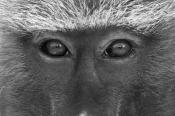 """Führung durch die Ausstellung """"Primaten"""""""