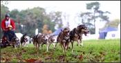 Schlittenhunderennen am Otto-Maigler-See