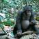 Vortrag: Neues aus der Schimpansenwerkstatt