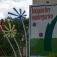 Spannende Pflanzenwelt - ab 6 Jahre
