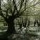 """Geführter Spaziergang """"Verwunschener Wald - Bizarre Baumwesen"""""""