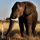 Südafrika - Vom Kap zum Krüger