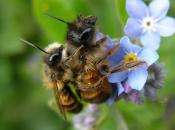 Das wilde Leben der Wildbienen, Vortrag
