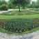 Festa Junina - Brasilianisches Picknick im Botanischen Sondergarten