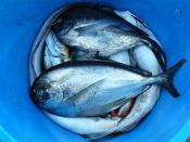 Asia meets Mediterran: Fischgerichte aus beiden Kulturen