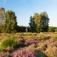 Singlewanderung auf der Trupbacher Heide in Siegen
