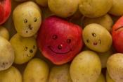Wulksfelder Kartoffelmarkt und Norddeutsche Apfeltage