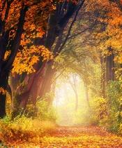 Herbstkonzert