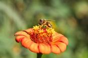 Bienentag – Der Zoo summt