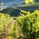 Wanderung mit Singles zur KulturNacht Ahrweiler