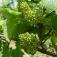 Weinseminar Grundlagen 1 - Einsteiger