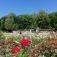 Konzert im Rosengarten: Rosi und die Knallerbsen