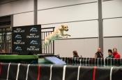 Der Trendsport Dog Diving startet in eine neue Saison!