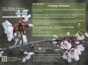 FRÜHLINGS-Workshop: QiGong - TCM - Ernährung