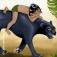 Mannheimer Dschungelbuch - Mit der Musik von Xavier Naidoo und anderen