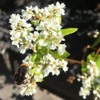 Pflanzen für Vegetationsesser
