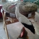 Ausstellung: Der Weißstorch in MV - Ein Vogel von Welt