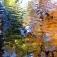 Spiegelungen von Bäumen im Sachsenwald in der Bille zu verschiedenen Jahreszeiten