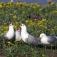 Vortrag: Die Vogelwelt der Insel Langenwerder