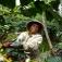 Vortrag: Kaffee – Herkunft, Anbau, Handel, Fairness