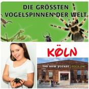 Spinnen- und Insekten Ausstellung