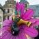 Gartenflair Erlebnismarkt im Schlosspark - Erlebnismarkt mit 140 Ausstellern