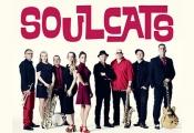 Soulcats - Cologne All Star Soulband Live Konzert & Soul-party Zum 30jährigen!