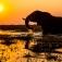 """""""Afrika - Unterwegs im wilden Süden""""- Katalogpräsentation mit anschließender Live-Reportage"""