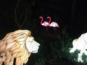 Geheimnisvolle Lichterwelten - Zoolights Rostock