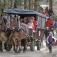 Nikolaus-Futtertour im Wildpark Schwarze Berge