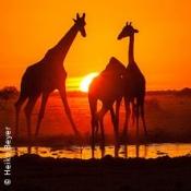 Expedition Erde: Südafrika