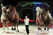 Circus Salto gastiert vom 22. bis 26.1.2020 in Hagen