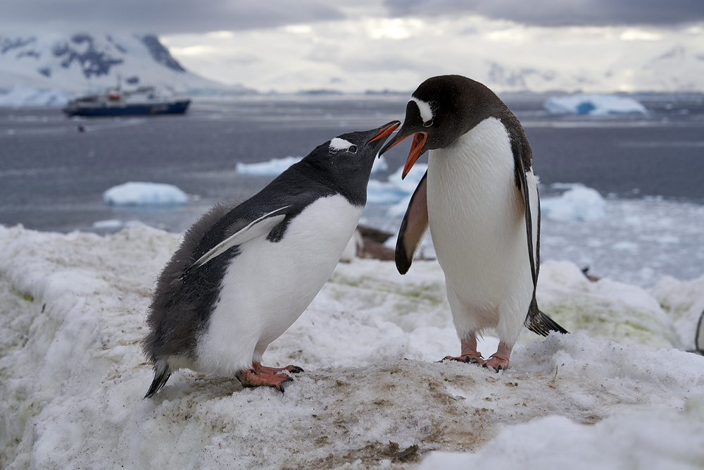 Antarktis 2019