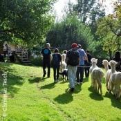 Alpaka Wanderung in der Weilachmühle