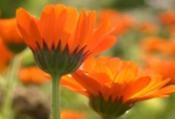 Die Kraft antiviraler und antibakterieller Pflanzen (2 Tage)