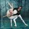 Schwanensee - Russisches Ballettfestival Moskau