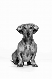Haustier-Fotoshooting im Leitz-Park
