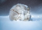 """""""Europäischer Naturfotograf des Jahres 2020"""""""