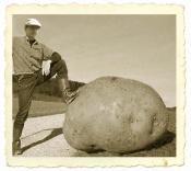 Merbecker Kartoffelmarkt